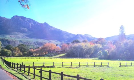 Constantia, Half-Day, Sip & Cycle