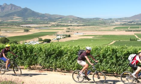 Cape Paarl Valley, Full-Day, Winelands Cycle