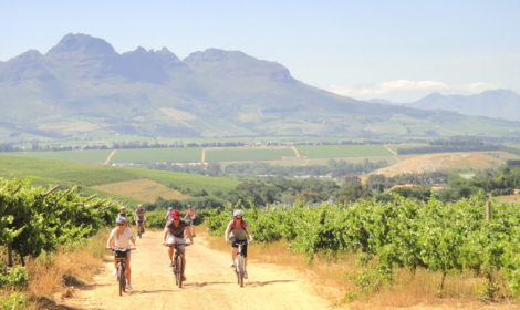 Stellenbosch To Franschhoek Cycle, Full-Day