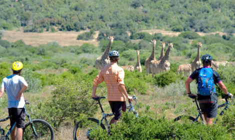 Cape Town, Full-Day, Cycle Safari