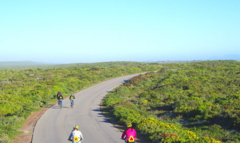 Cape Town, Full-Day, West-Coast Cycle