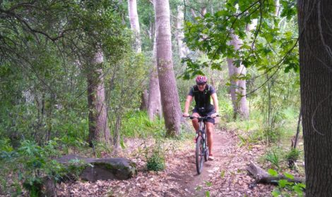 Cape Town, Full-Day, Table Mt & Forest