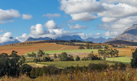 Stellenbosch, Devon Valley, Backroads & Wines