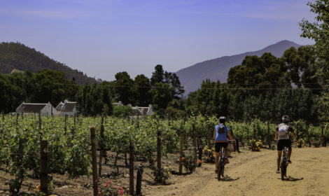 Franschhoek, Full-Day, Wine & Ride