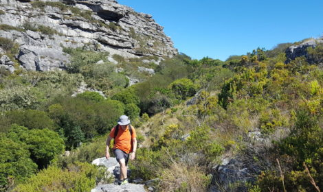 Franschhoek, Full-Day, Mountains & Wine Hike