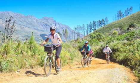 Stellenbosch, Full-Day, Forest Track Cycle