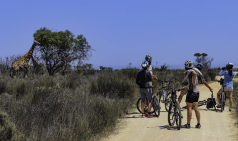 Cape Town, Full-Day, Cycle and Safari