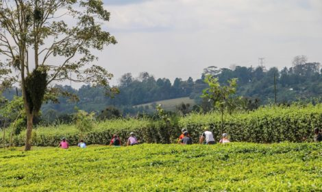Nairobi, Full Day, Karen Blixen Farm & Coffee Ride